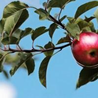 På frukten känner man trädet