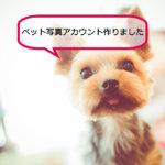 Instagram*ペット写真アカウント開設