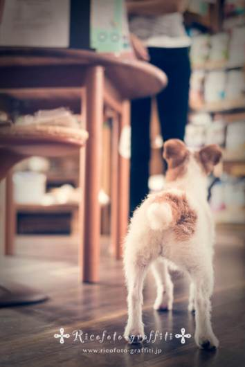 Ricofoto_pet_photo0131