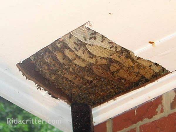 honeybee removal control birmingham