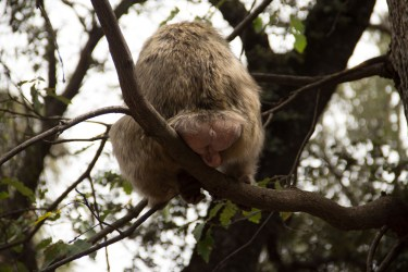 monkey_ass