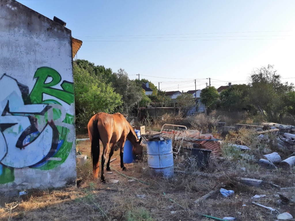 Horses rescued from garbage dump