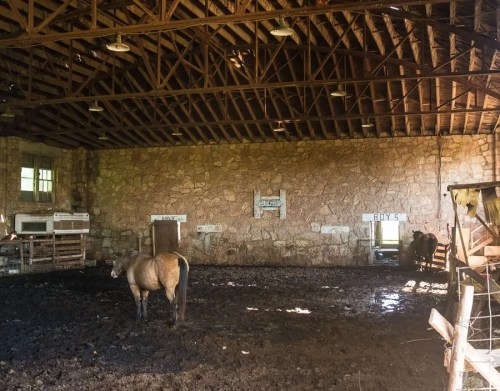 The inside of the old Cloud Chief school gymnasium was being used by a couple of horses to get in out of the sun.
