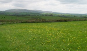 West Devon Countryside