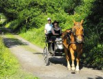 Bring your horse on holiday
