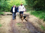 Dog walking in Cookworthy Forest