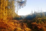 Beautiful Cookworthy Forest