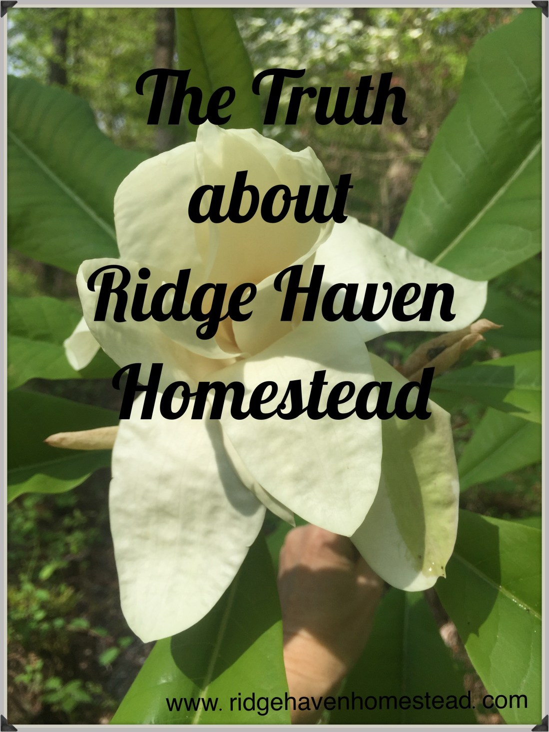 Ridge Haven Homestead.  Hope