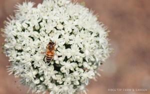 Farm Garden Bee