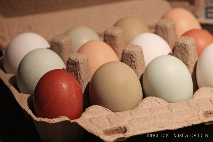 White Colored Eggs Carton
