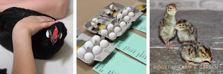 PNPA Spring 2013 eggs quial