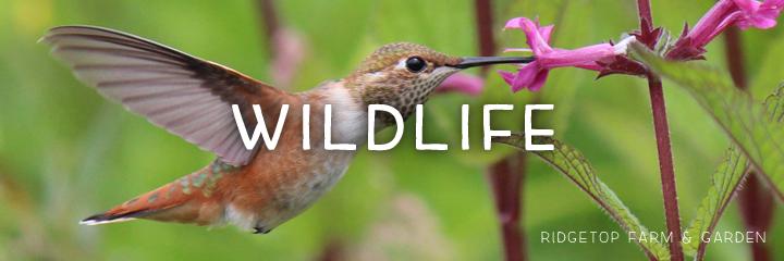 header - wildlife