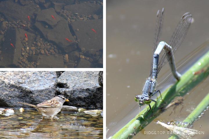 BIrd Village Pond critters
