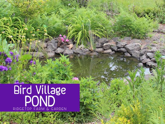 BIrd Village Pond title