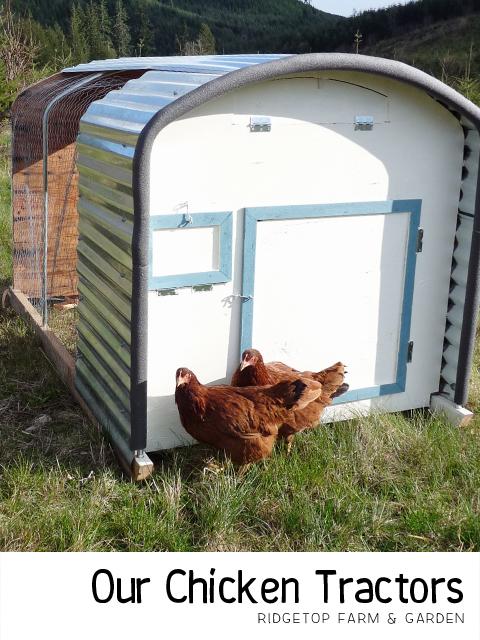 Chicken Tractor title