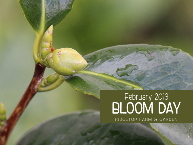 Feb2013 Bloom Day title
