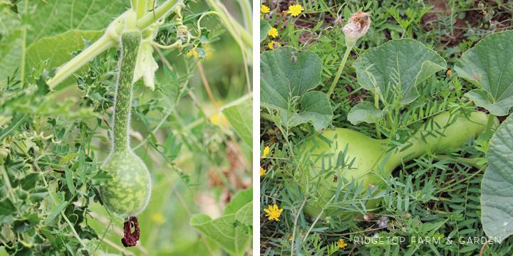 Garden Grows Aug2014 Out4