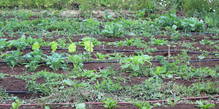 Garden Grows June2014 1
