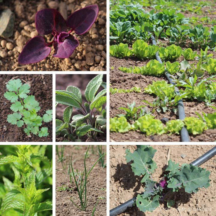 Garden Grows June2014 3