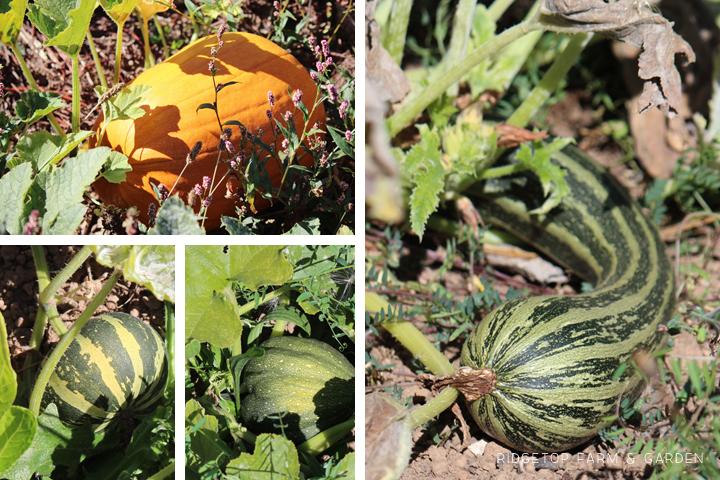 Garden Grows Sept2014 2