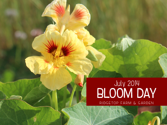 July 2014 Bloom Day title
