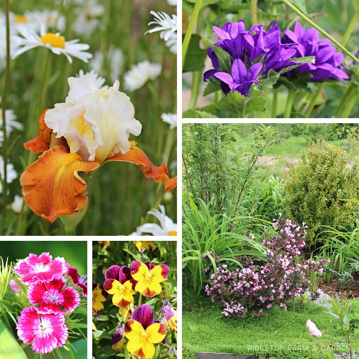 June 2012 Bloom Day bird village2