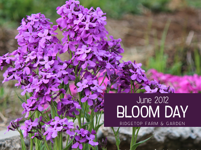 June 2012 Bloom Day title