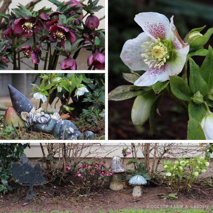 March 2014 Bloom Day shade garden