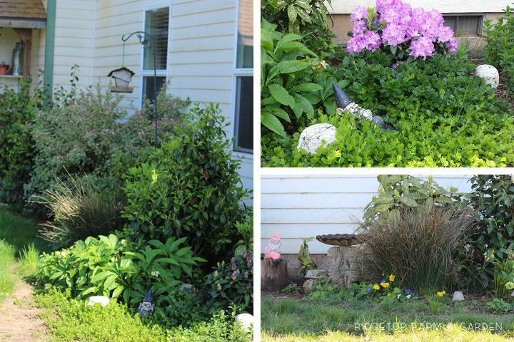 Shade Garden 2014