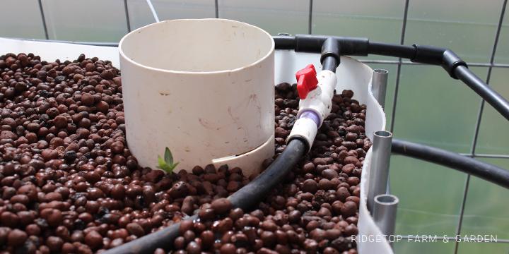 Ridgetop Farm & Garden | Aquaponics Update April 2014 |Clay Pebbles in Grow Bed