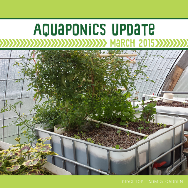 Aquaponics Update Mar2015 title