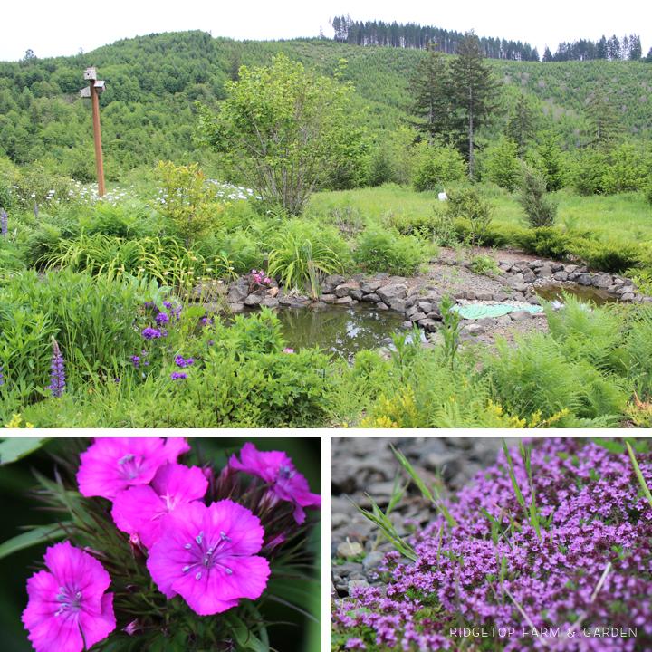 May 2015 Bloom Day bird village2