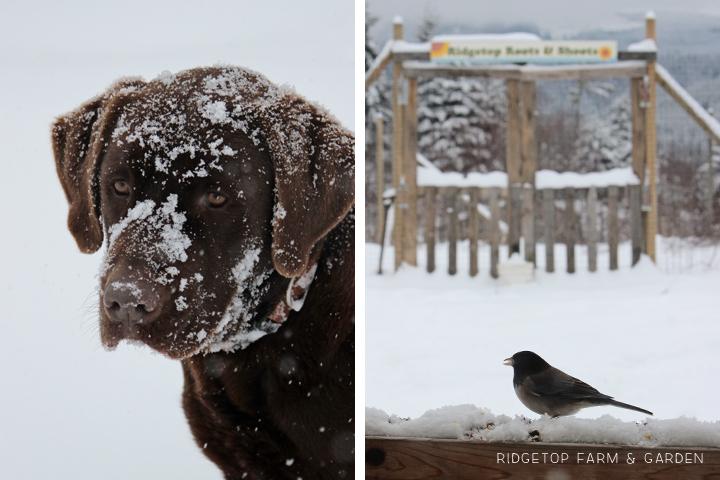 Snowpocalypse 8