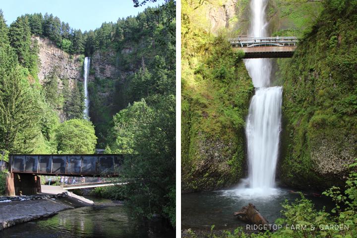 Ridgetop Farm & Garden | Columbia Gorge Day Trip | Multnomah Falls