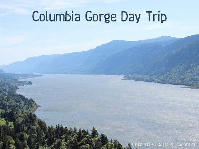 Ridgetop Farm & Garden | Columbia Gorge Day Trip
