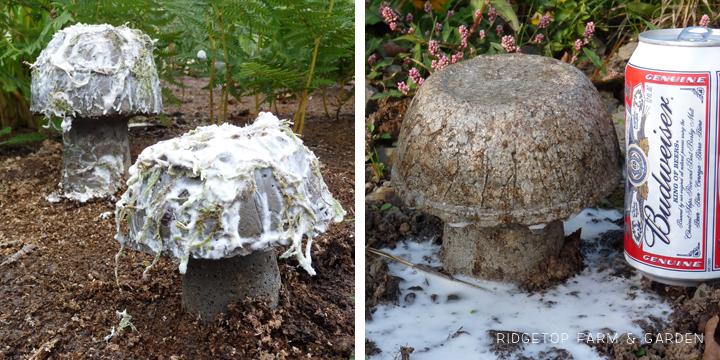 Ridgetop Farm & Garden   Hypertufa Mushrooms