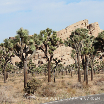 Road Trip – Joshua Tree National Park