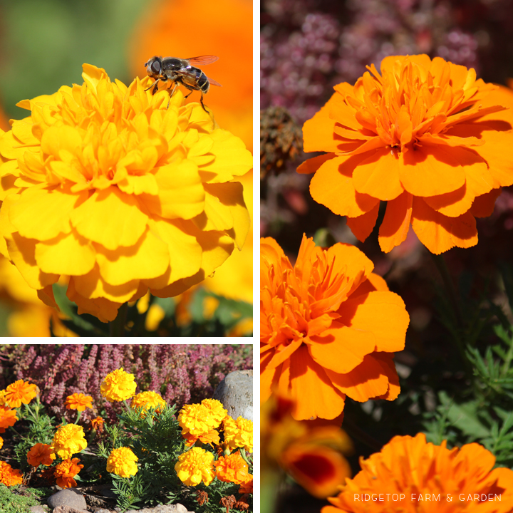 BloomDay-Sept2015_10