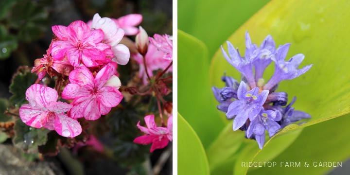 BloomDay-Sept2015_4
