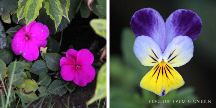 BloomDay-Sept2015_5