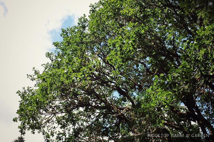 Ridgetop Farm and Garden   Magness Memorial Tree Farm