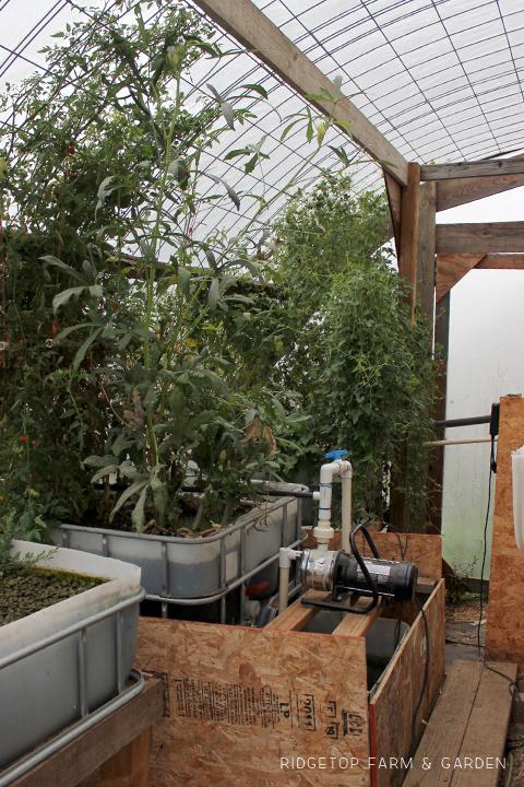 Ridgetop Farm and Garden | Aquaponics Update | October 2015