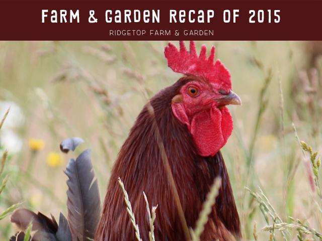 Ridgetop Farm and Garden | 2015 Recap