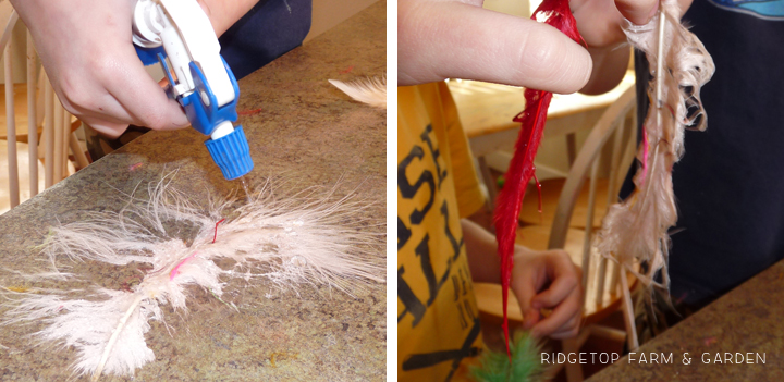 Ridgetop Farm and Garden   Home School   Animal Studies   Bird Feathers