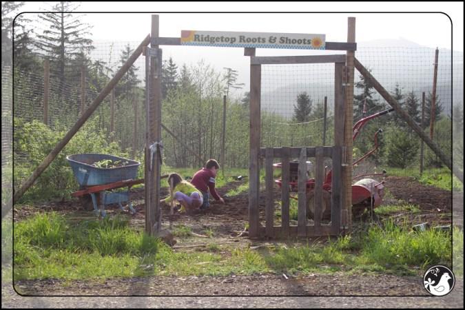 Ridgetop Farm and Garden | April 2014 Update