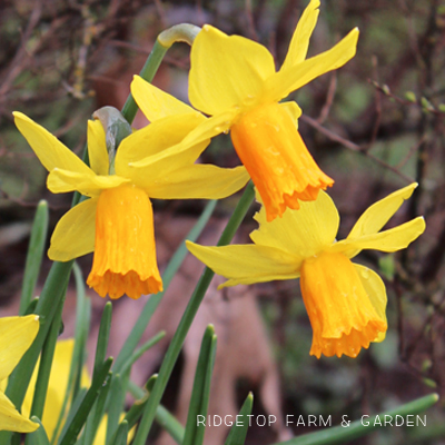 Bloom Day – March 2016