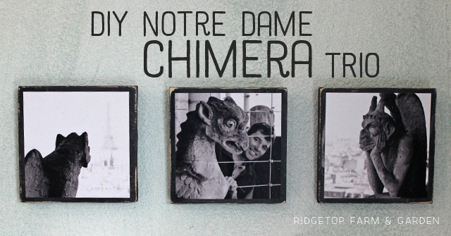Ridgetop Farm and Garden | Notre Dame Chimera Trio | Photo Craft