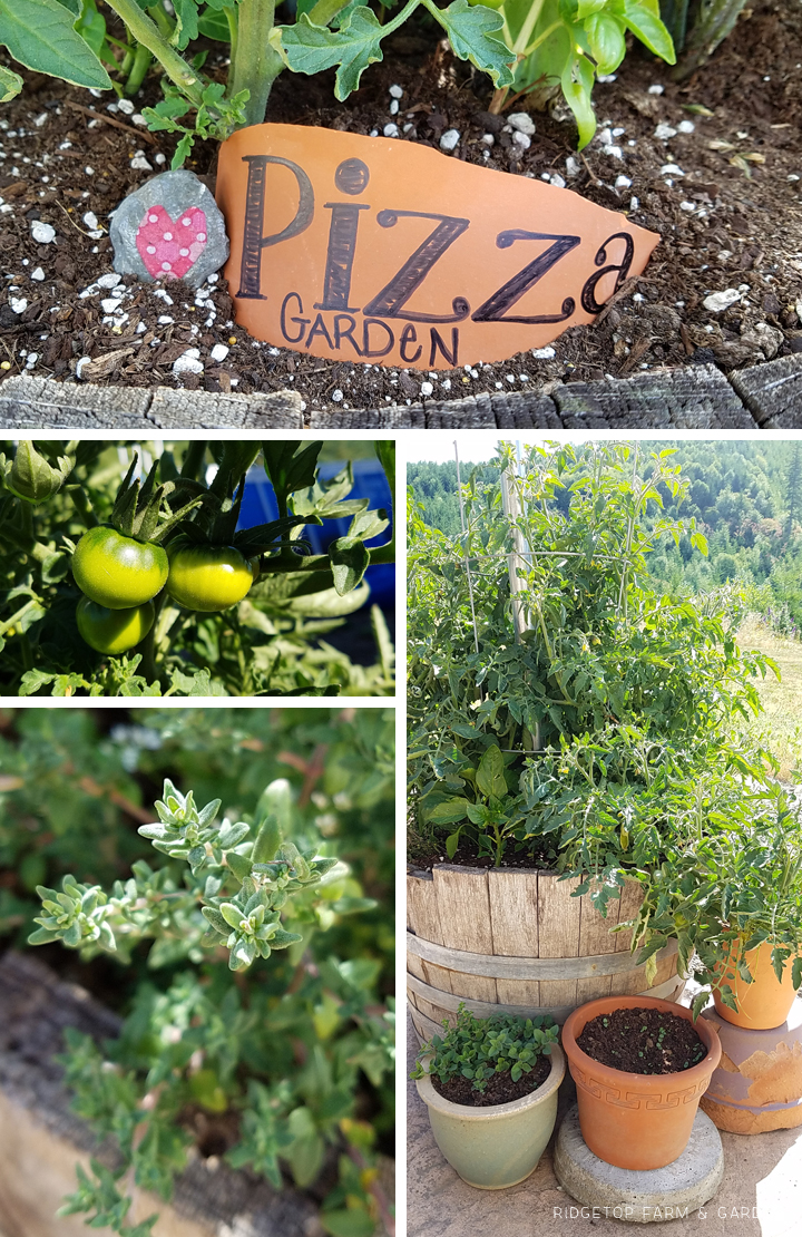 Ridgetop Farm and Garden | Project Repurpose | Herb Barrel from Water Fountain | Pizza Garden