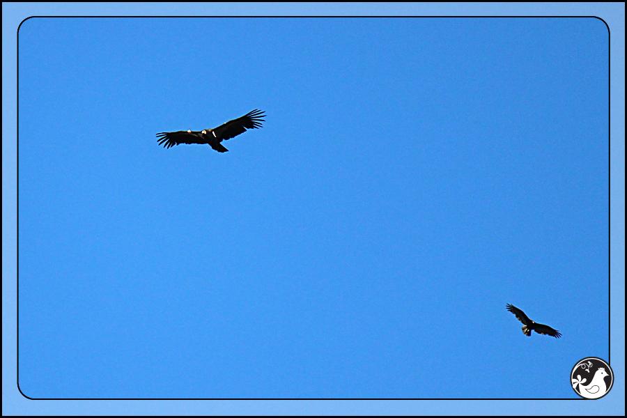 Ridgetop Farm and Garden | Birds of 2013 | Week 35