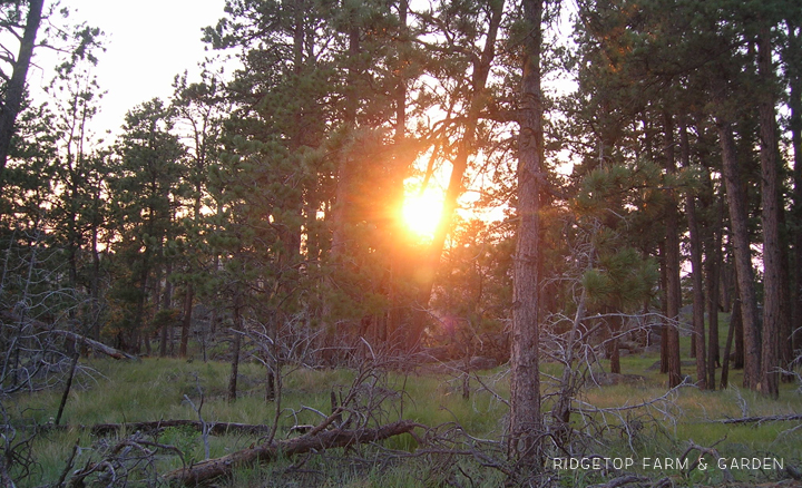 Ridgetop Farm and Garden | Travel | National Park | Wyoming | Devils Tower